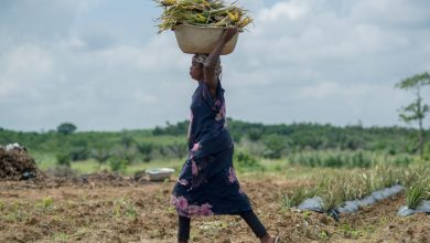 Photo of African agriculture without African farmers | Agriculture